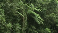 Stock Video Footage of Panoramic View Of The Lush Tropical Plants In The Amazon Rain Forest