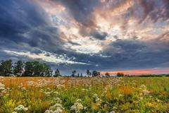 sunset in summer field - stock photo