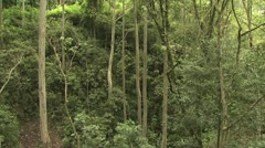Amazon Rainforest Interior View - stock footage