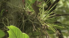 Close Up Of A Mysterious Plant In The Amazon Rain Forest - stock footage