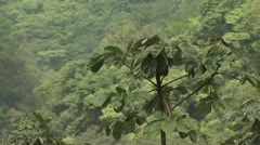 Canopy of the Amazon Rainforest Stock Footage