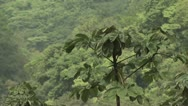 Stock Video Footage of Canopy of the Amazon Rainforest