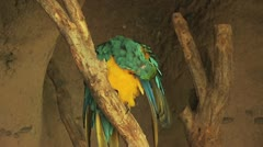 Parrot On A Tree Branch 2 Stock Footage