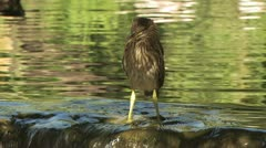 Bird By The Waterfall Stock Footage