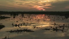 Flock of Flamingos Swimming And Feeding 1 Stock Footage