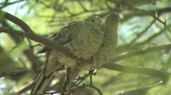 Two Birds Perched On A Tree Branch Stock Footage