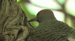 Bird Resting In A Tree Stock Footage