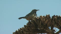 Bird Perched On A Branch Flays Away Stock Footage