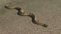Snake Crawling 2 Stock Footage