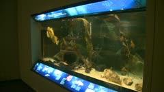 Aquarium exhibitions (7 of 7) Stock Footage