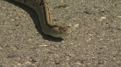 Rattlesnake Slithers On The Pavement Stock Footage