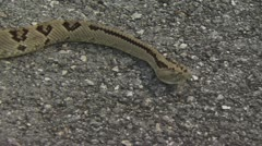 Rattlesnake Slithers On The Pavement 3 Stock Footage