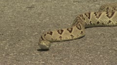 Rattlesnake Slithers On The Pavement 7 Stock Footage
