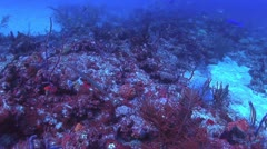 Southern Florida Coral Reef - stock footage