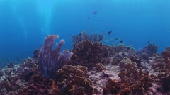 Coral Reef With School of Fish in Background Stock Footage