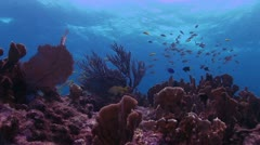 Bottom View of Red Coral Reef Stock Footage