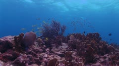 Bottom View of Red Coral Reef With School of Fish Near the Water s Surface Stock Footage