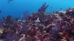 Red Coral Reef 2 Stock Footage