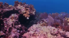 Bottom View of Red Coral Reef 3 Stock Footage
