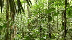 Primary tropical rainforest with palms Stock Footage