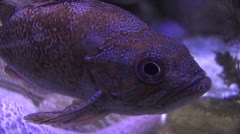 Topical Fish Stock Footage