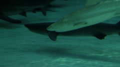 Many Sharks In An Aquarium - stock footage