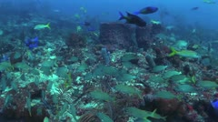 Schools Of Tropical Fish And Coral Stock Footage