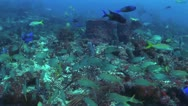 Stock Video Footage of Schools Of Tropical Fish And Coral