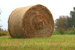 Stock Photo of dry hay bale grass