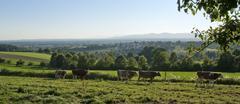 Stock Photo of idyllic scenery around emmendingen