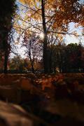Stock Photo of sunlight autumn tree