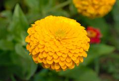 yellow flower. - stock photo