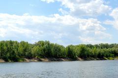 wood on river coast - stock photo
