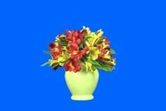 flower bouquet - stock footage