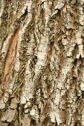 Stock Photo of tree bark. details. close up. texture.