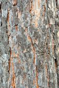 tree bark. details. close up. texture. - stock photo