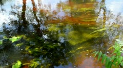 River stream water flow reflections underwater flora Stock Footage
