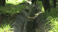 Primitive Irrigation Method Stock Footage