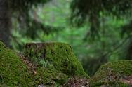 Green stump Stock Photos