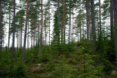 nordic woodland - stock photo