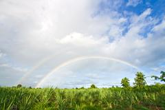 Rainbow in meadows grass Stock Photos