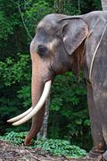 africa elephant - stock photo