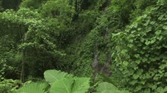 Aerial View Tropical Waterfall And Surrounding Lush Vegetation Stock Footage