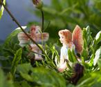 Stock Photo of two fairy on vegetation