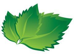 Birch leaves Stock Illustration
