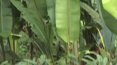Close Up Of Large Green Tropical Plant 2 Stock Footage