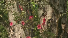 Red Wild Flowers Growing On and Around A Tree Trunk Stock Footage