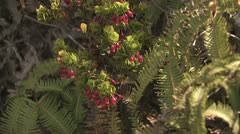 Close Up View of Tropical Hawaiian Plants 4 Stock Footage