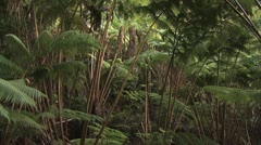 Stock Video Footage of Panorama of Lush Hawaiian Foliage