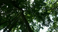 Jungle trees overhead rotation with sun - stock footage